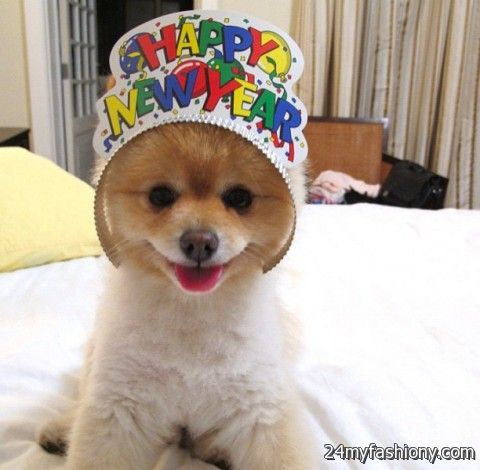 Happy New Year Dog images 2016-2017 | B2B Fashion